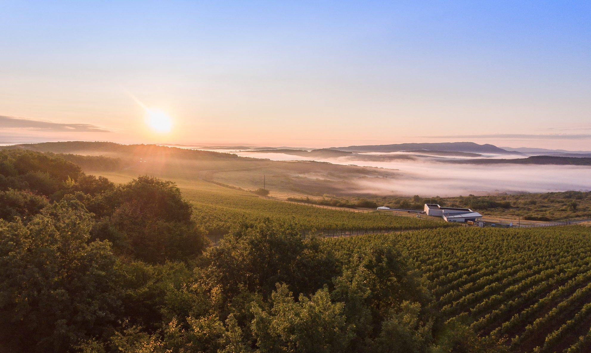 Crama Carastelec: drumul spre excelență și curajul de a produce vinuri efervescente în România. Interviu cu Ilonczai Balázs